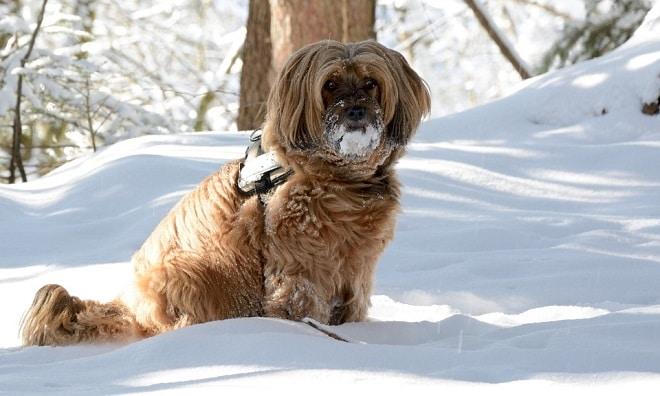 El frío afecta también a tu perro, ¿sabes cómo ayudarle?