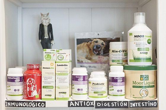 ¿Cómo reforzar las defensas de nuestro perro o gato con productos naturales?
