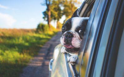 Animales viajeros: tratamientos naturales para que disfruten de los viajes