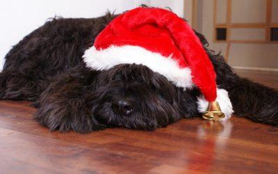 """¿Tu perro está bajo de energía? Prepárale unas ricas galletas """"adaptógenas"""" estas Navidades"""