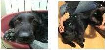 Acupuntura y fitoterapia para animales