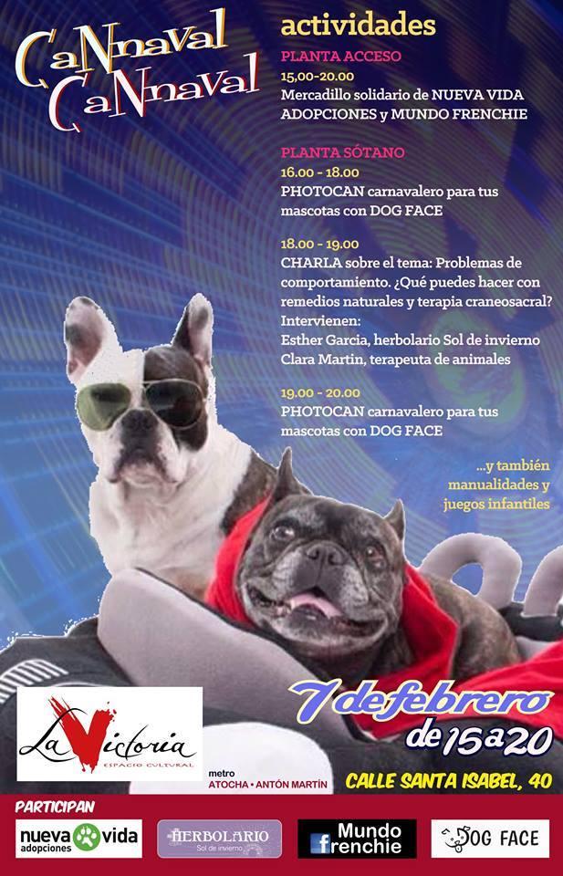 «Problemas de comportamiento en tus mascotas: ¿qué puedes hacer con remedios naturales y terapia craneosacral?»