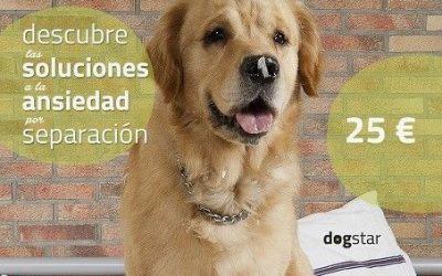 Taller de soluciones para ansiedad por separación canina