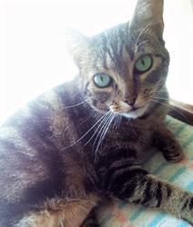Taller sobre problemas del riñón y la vejiga en gatos
