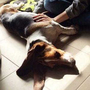 Osteopatia craneosacral para animales