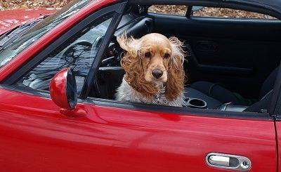 ¿A tu perro o gato le angustia viajar?