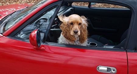 Náuseas en el perro al viajar