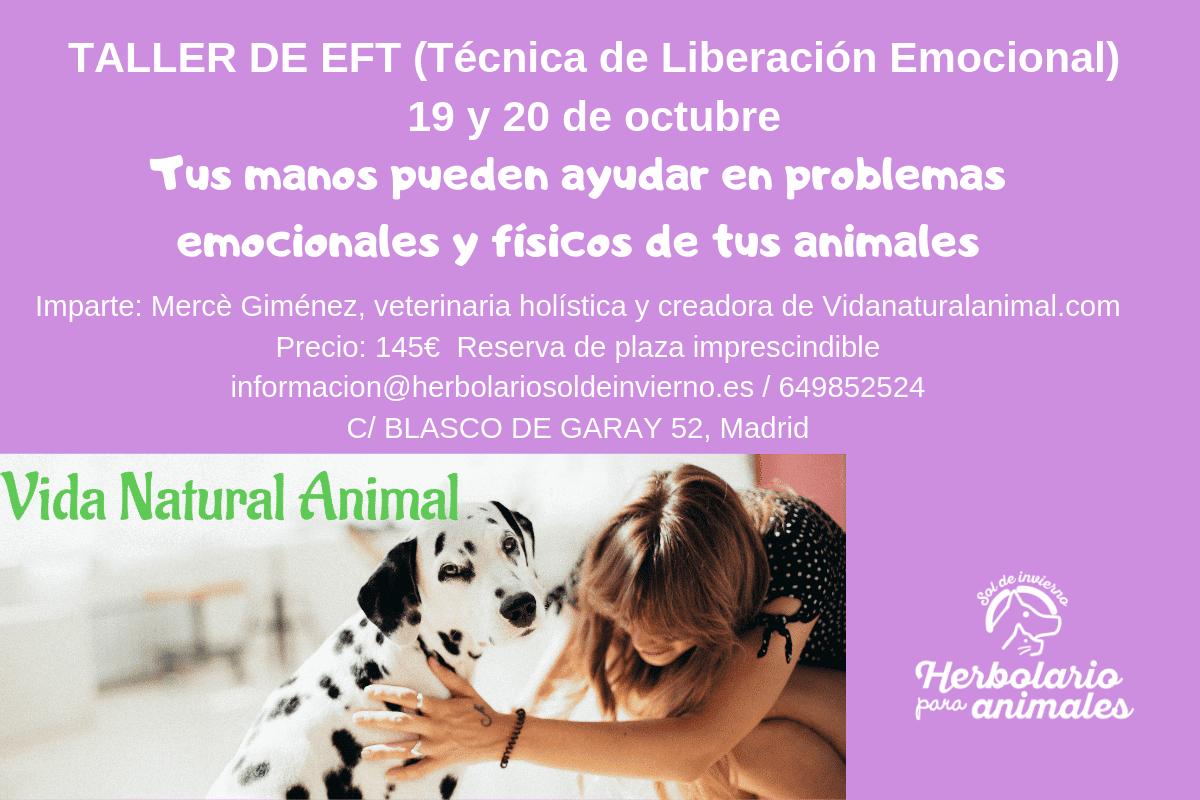 Curso EFT para animales