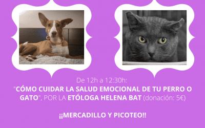 Jornada solidaria con perros y gatos en Kendra Life