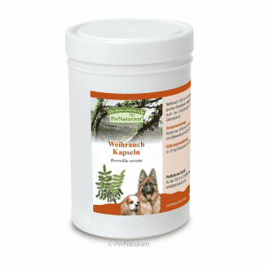 antiinflamatorio-natural-perros