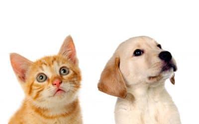 Un cachorro en casa: ¡consejos para que crezca sano y feliz!