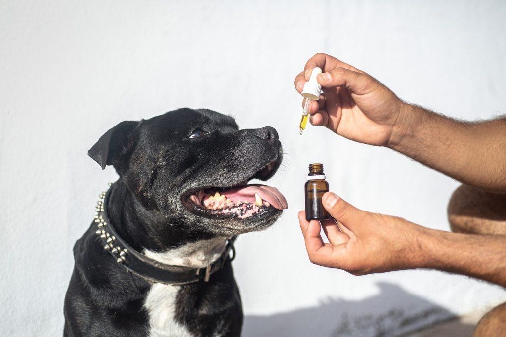 cbd-perro-dosis