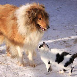 etologia canina y felina