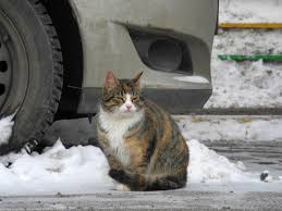Mercadillo solidario y dulces navideños por los gatos callejeros