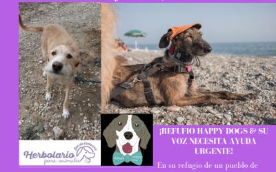 Comida vegana y mercadillo solidario del refugio Happy dog & su voz