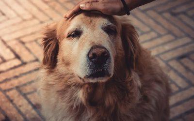 Cómo facilitar la adaptación al hogar de un animal adoptado