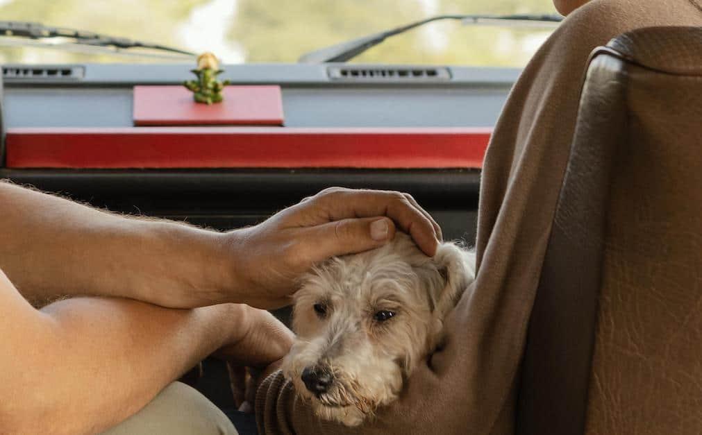 perro-ansiedad-coche
